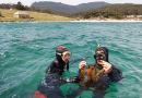 Experiencing Tasmanian marine life first-hand