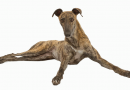 Spare a thought for greyhound Samaritans