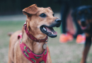 To dog park or not to dog park?