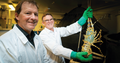 Leading the way in rock lobster research